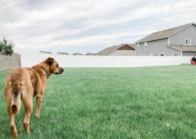 White Vinyl Fencing with Dog